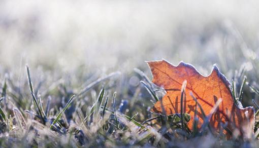 freddo_piante